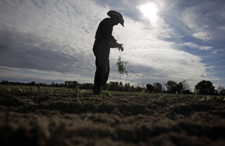 The U.S. needs a new agricultural guestworker program. Here's my plan. | U.S. Rep. Ted Yoho