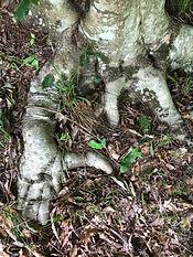 root hands.jpg