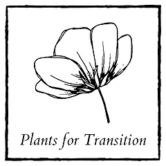 plants for transition.png