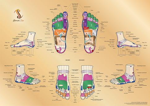 Planche de réflexologie