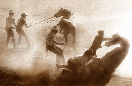 Wild Horses, Rodeo