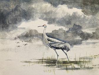Sandhill crane amidst wetlands
