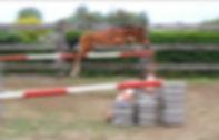 PRESTIGE VD BISSCHOP jumping as foal.jpg
