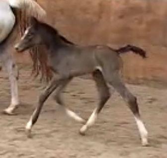 Beautiful mare born last night 😍_☘️CINE