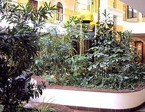 Создание зимних садов, озеленение эксклюзивных интерьеров