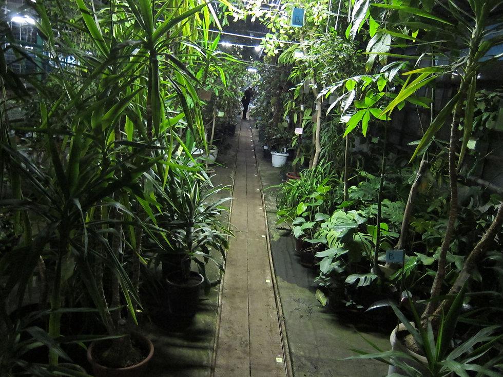 """Экзотические тропические растения на выставке-продаже """"Зимнего сада"""" в садовом центре"""