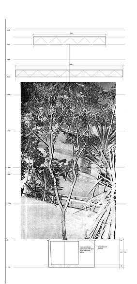 Посадка тропического дерева в пол