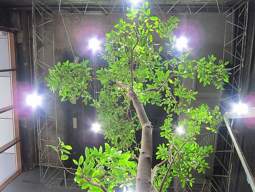 Светодиодное освещение для комнатных растений