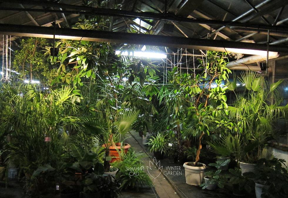 """Выставка-продажа """"Зимнего сада"""" """"Тропические растения необыкновенных размеров"""""""