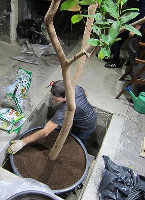 Посадка дерева в пол
