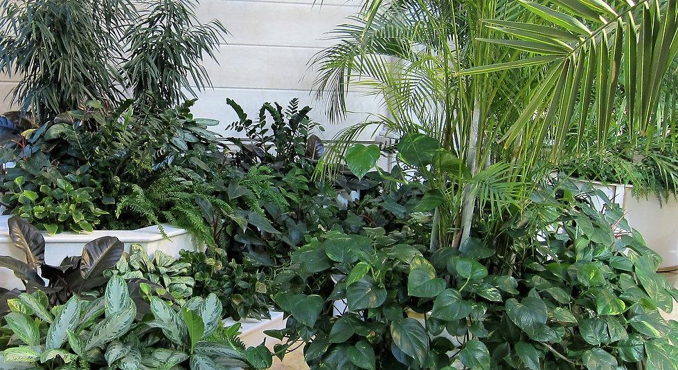 Проект зимнего сада, посадка тропических деревьев, создание композиций из растений