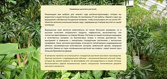 Уникальные растения для зимнего сада из теплицы в Москве