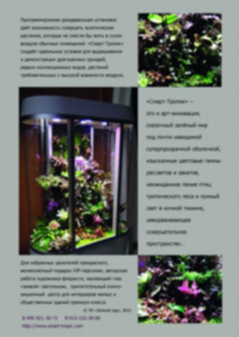 био-климат-контроль, автоматика, макодес, анектохилус, великолепный подарок VIP, криптантус
