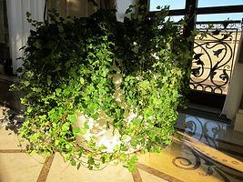 Почвопокровные растения в композициях, растения нижнего яруса, плющ-хедера, красивое фото с растениями