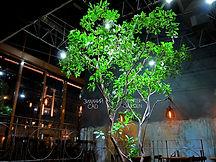 Растения и свет, освещение растений в интерьере, светодизайн