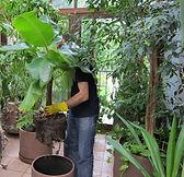 Обслуживание растений в интерьере, уход, пересадка