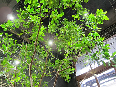 Светодиодное освещение тропических растений