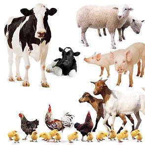 Animals-28_Farm_Animals-600x600.jpg