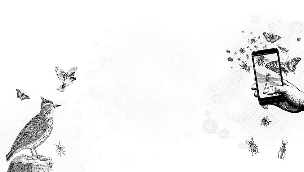 miniwildnis_header_white.jpg