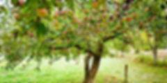 dastunwir_region_pic_1.jpg