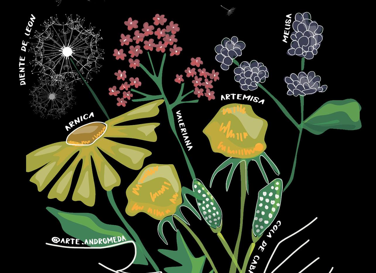 floresmedicinales.jpg