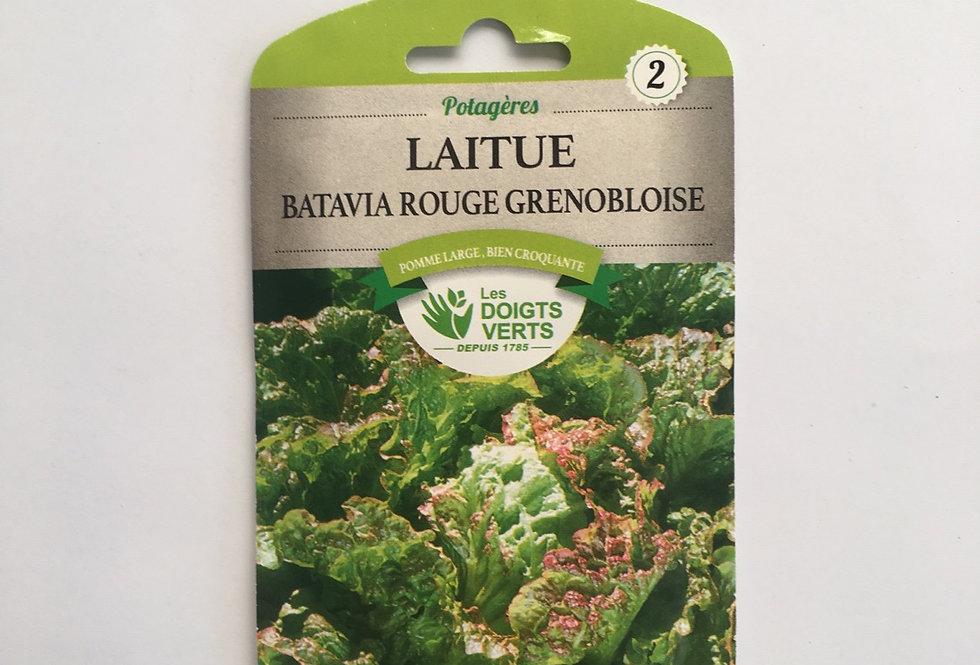 Laitue batavia Rouge Grenobloise