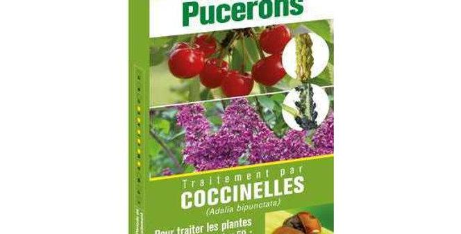 Pack Prépayé Coccinelles