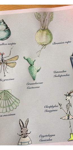 Cléophyle  Naturaliste