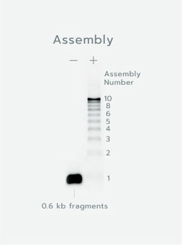b-img_advantages.jpg