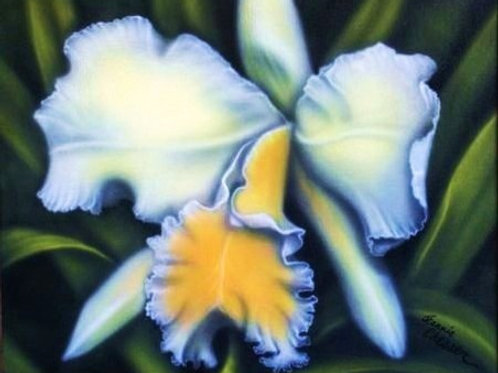 Yellow Orchid Jeannie Chesser