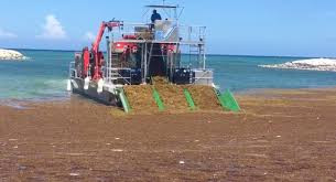 Quintana Roo set to install containment barriers to halt sargassum invasion