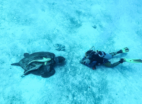 DIVING IN MAHAHUAL...