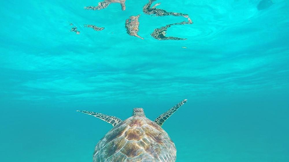 snorkeling, mahahual, costa maya, real estate, bienes raices, for sale, venta, propriedad