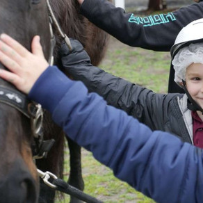 Equine therapy helping Tasmanian primary school kids learn