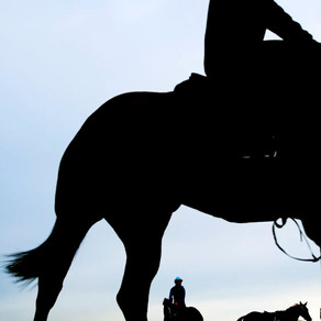 Trainer banned for three years over horse slaughter