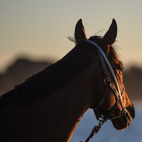 Racing Victoria establishes Equine Welfare Advisory Council