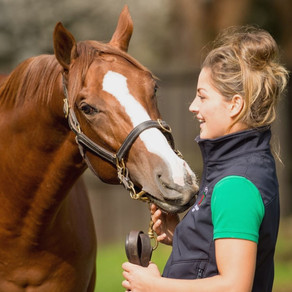 Call for submissions for Thoroughbred Aftercare Welfare Working Group (TAWWG)