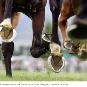 What are the rules on racehorses being slaughtered?