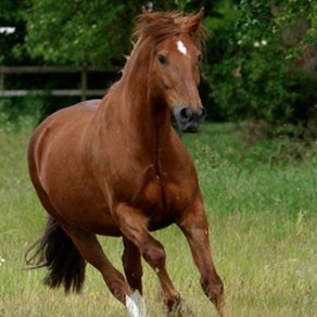 Horse tracing register to improve biosecurity