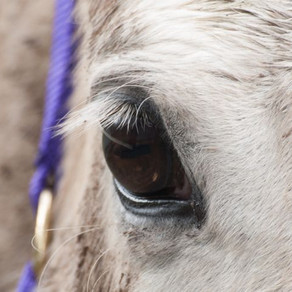 National Horse Traceability Register working group established after Senate inquiry