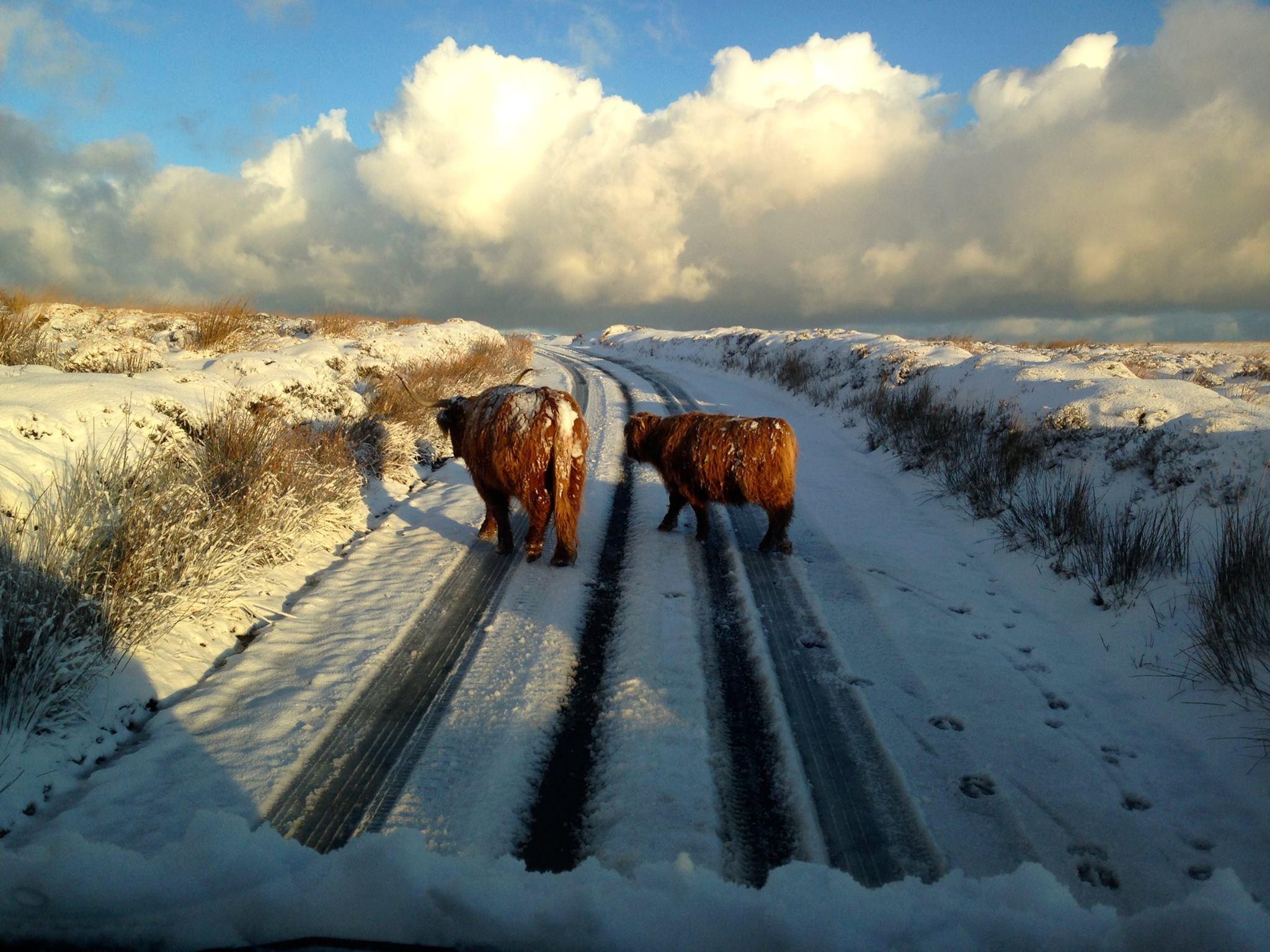 402-exmoor-adventures-snow-highland-catt