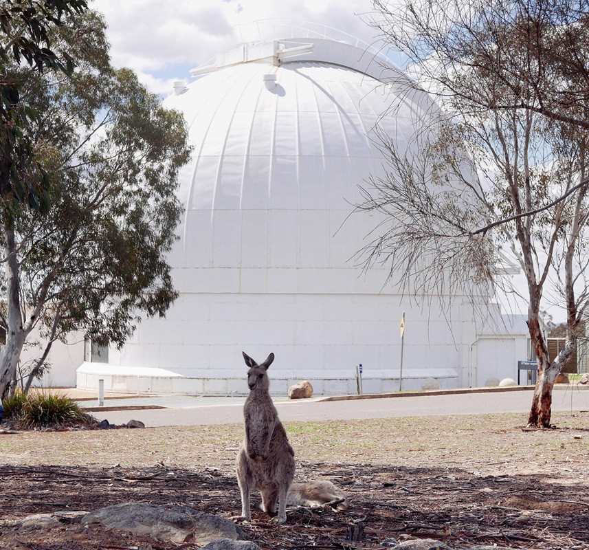 A kangaroo stands guard in front of the dome of the 74-inch telescope at Mount Stromlo Observatory (Dan Falk)