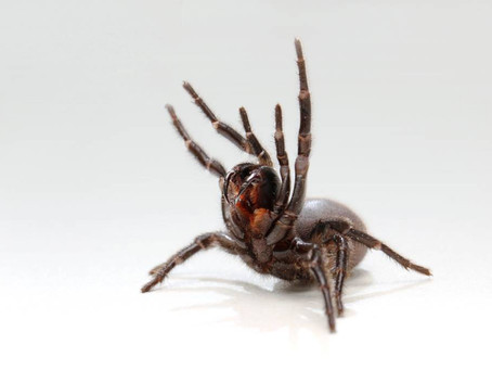 Aussie Medical Researchers Turn to Venoms to Save Lives