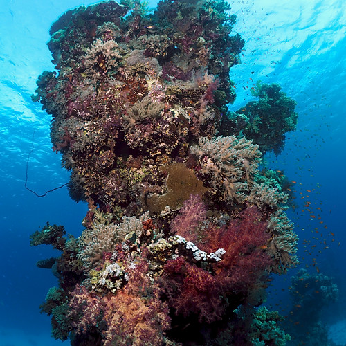 Egyptian Tourist Trails and The Red Sea