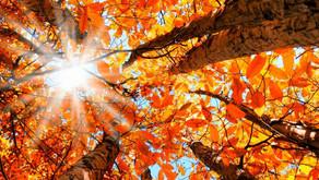 Ah, o outono!