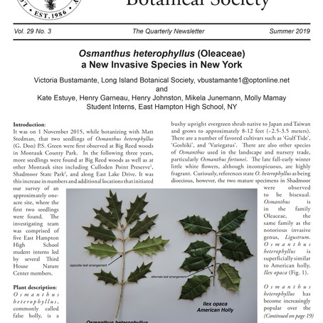 Long Island Botanical Society  Osmanthus heteropyllus a New Invasive Species in New York