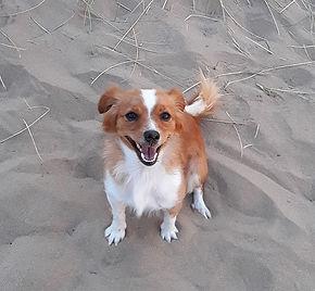 Mélusine chien thérapeute