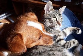 Mélusine et Patchamama animaux thérapeutes