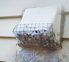 dryer-vent-cleaning-vent-hood-screen (1)