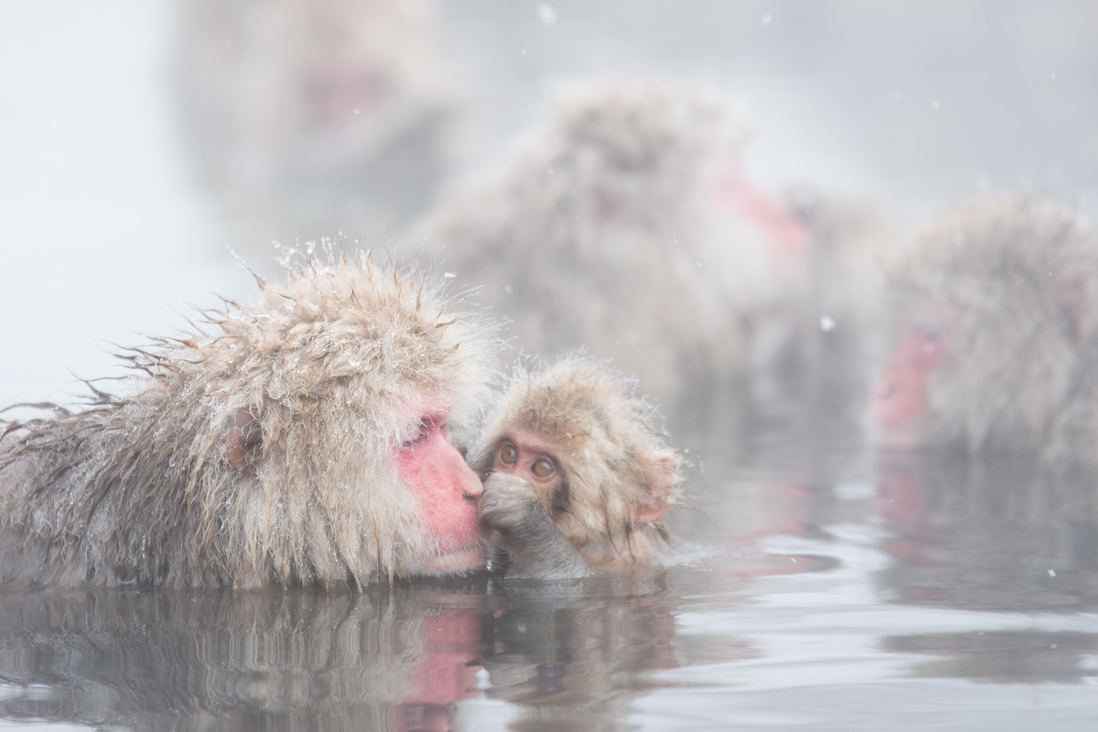 長野県 地獄谷野猿公苑